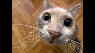 Funny cats and fish. Смешные кошки. Кошка и рыбка.