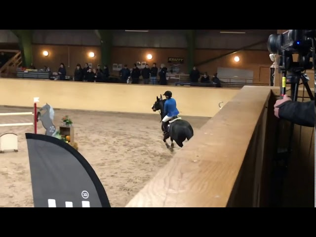 Out of the same family - International Jumping Horse Diamant