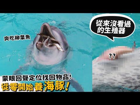 許伯&簡芝-從零開始養,介紹海豚養成記