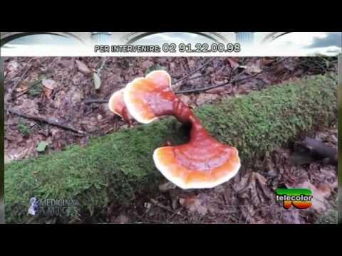 Pollici di fungo di gambe