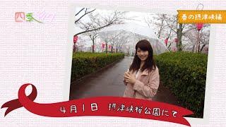 四季彩々 春の摂津峡編
