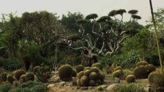 Cactus Garden in Haryana