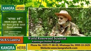 Sugar Blood Pressure with Kangra Herb