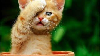 Коты разбойники 20 эп. Шок! У кота своровали добычу! Лучшие приколы декабрь 2016