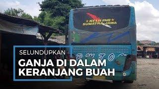 Ganja di Keranjang Buah Asal Aceh Mendarat di Tangerang Berjumlah 50 Paket Seberat 50 Kilogram