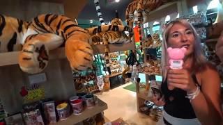 Таиланд. Паттайя. Экскурсии. Тигры в Паттайе.