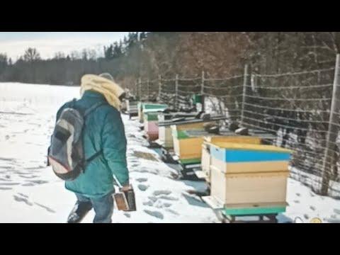 Пчеловодство.Воскресный стрим.Подготовка пчел к зимовке.Сбор гнезда в зиму Обработка перед зимовкой.