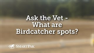 Ask the Vet - What are Birdcatcher spots?