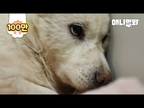Dog Protected Her Dead Puppy Even When Her Life Was At Risk In A Dog Farm