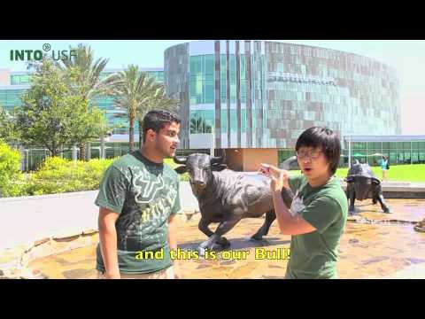university of south florida florida usa college and university usf campus tour