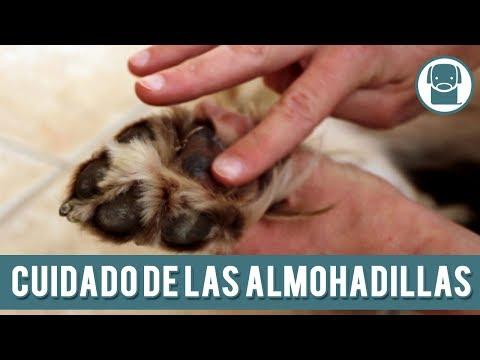 Cómo Evitar Que Los Perros Se Quemen Las Patas | Cuidado De Las Almohadillas