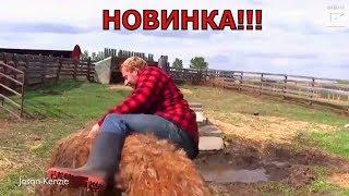 Приколы 2018 лучшие с котами мая смешные видео  с животными ржака до усрачки прикол -  Приколюха