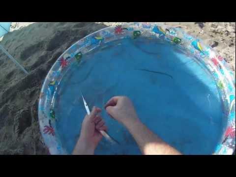 Dove in wow per fare oscillare la pesca
