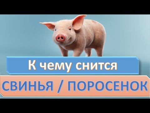 К чему снится свинья (поросенок) | СОННИК