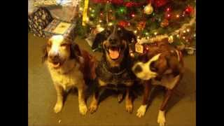 Singing Dogs - Rockin Around the Christmas Tree (Billy Gillman version)