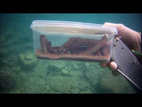 Alla quale temperatura il parassita nel pesce perisce