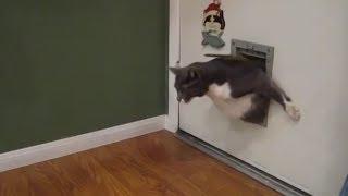 Fat Cats Vs Cat Flaps