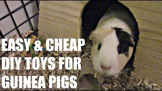 Easy & Cheap DIY Toys For Guinea Pigs ♥