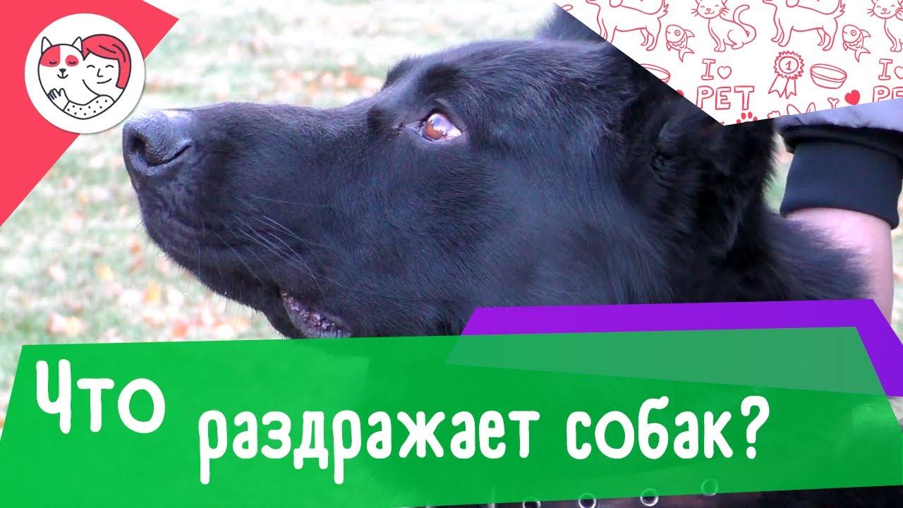 6 человеческих поступков, которые собаки терпеть не могут