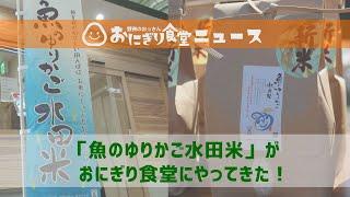 「魚のゆりかご水田米」がやってきた!:おにぎり食堂ニュース