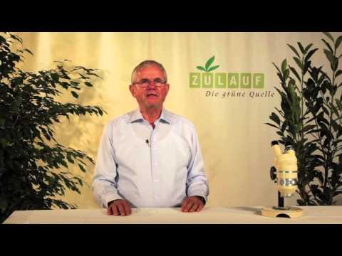 Hatha Yoga Behandlung von Prostatitis