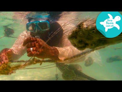 Ein Badeschwamm aus dem Meer | Mein Bruder und ich in Sansibar | SWR Kindernetz