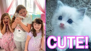 WE GOT OUR NEW KITTEN *CUTE OVERLOAD* AND NAME ANNOUNCEMENT! Fun Family Three Ava Isla And Olivia