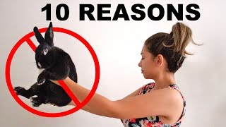 10 REASONS YOU SHOULD NOT GET A RABBIT