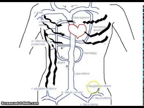 Pacientes hipertensos que deram à luz