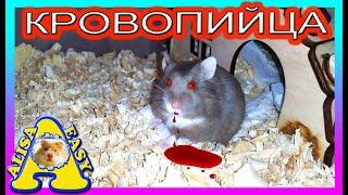 МОЙ ХОМЯК🐹 ПЫТАЕТСЯ🐾 МЕНЯ ЗАГРЫЗТЬ👹... / ХОМЯК МОЙ ВРАГ☠️ / Хомки кусаются / Alisa Easy Pets