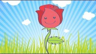 Cómo dibujar una rosa