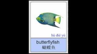 Mandarin Chinese Flashcards - Sea and River Animals I 普通话闪卡- 海洋及江河动物