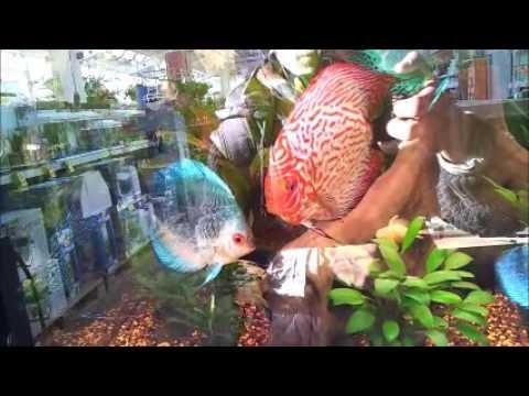 Ksenia steuert Fische im Obi in der Zooabteilung