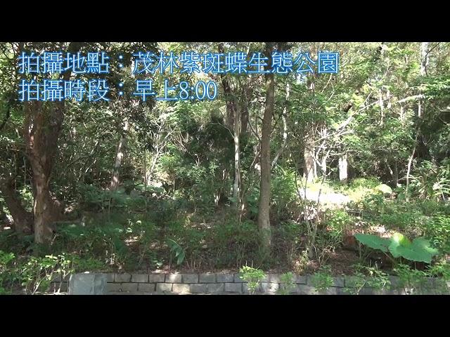 <html> <body> Film for Purple Butterfly2020-1-6 </body> </html>