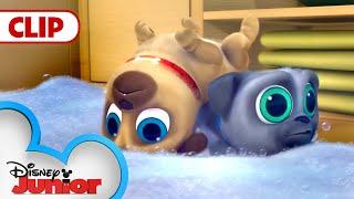 Cleanin' Pup! | Puppy Dog Pals | Disney Junior