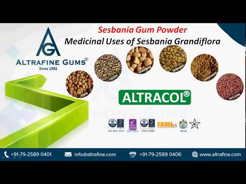 Sesbania Gum Powder - Medicinal Uses Of Sesbania Grandiflora Mp3