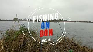 Ловля рыбца в ноябре на дону