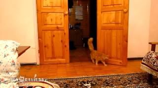 Смотреть онлайн Марио против кошек
