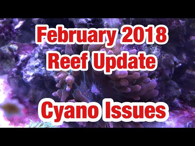 February 2018 Reef Tank Update | Red Sea Reefer 350 | Triton Method