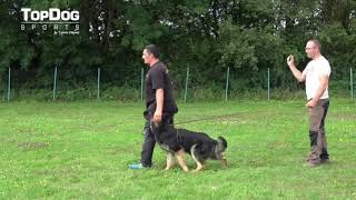 A Glance Into Obedience Troubleshooting