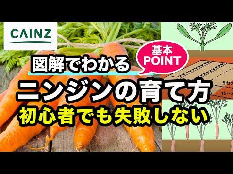 , title : '【カインズ野菜栽培】 ニンジンの育て方|人参の栽培方法|基本ポイント