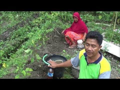 Video Cara Pemupukan Tambahan Susulan Budidaya Cabe Organik dg Air Lindi dan Pupuk Organik Padat Pabrikan