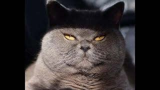 Приколы с кошками - коты в смешной одежде