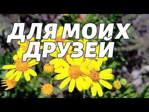 ДЛЯ МОИХ ДРУЗЕЙ!!!Музыкальная открытка!!!