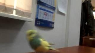 Окрыленный BNews.kz: Попугай в редакции информагентства