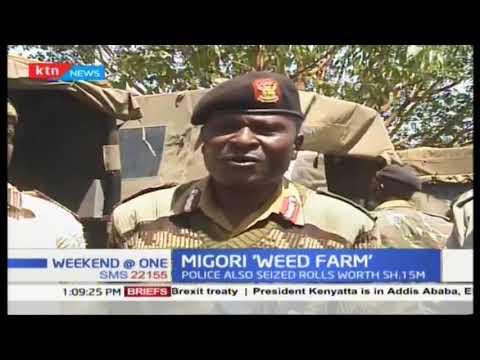 War on narcortics: Migori 'weed farm' with rolls worth 1.5 Million