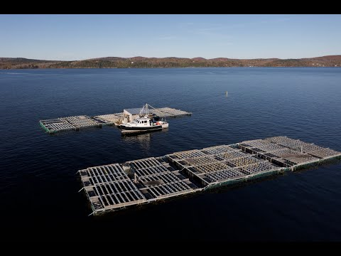 Growing the blue economy in Penobscot Bay with Mussel Farming