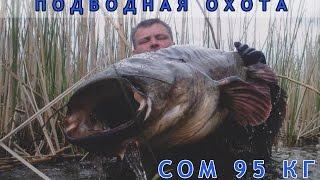 Рыбалка на трофейных сомах