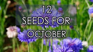 What To Grow In October 2020 | Flowers & Vegetables To Sow Now!