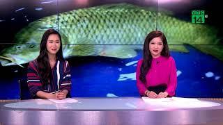 VTC14 | Bắt con cá chép gây xôn xao vùng quê Nghệ An mấy ngày tết